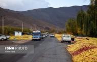 مشکل دپوی سیب در کنار جاده های آذربایجان غربی / نقش کمرنگ دلالان