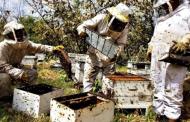 نمایشگاه بینالمللی عسل ارومیه برای جبران ناکامی ها می آید