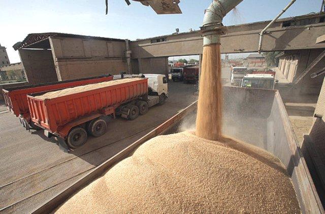 کشاورزان گندم خود را به سیلوهای بوکان و ارومیه تحویل دهند