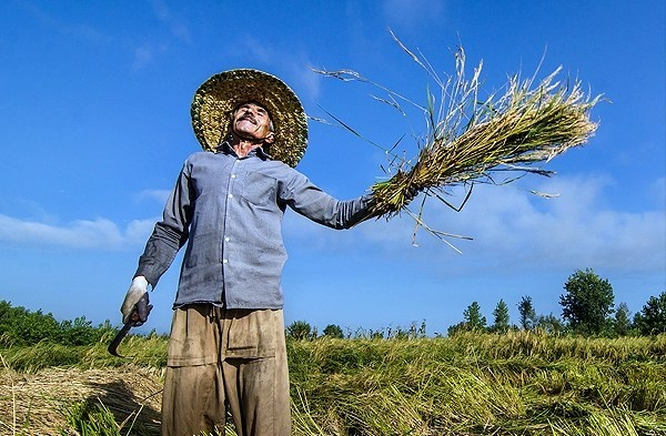 اجرای طرح بخشش جرایم تسهیلات کشاورزان مناطق خسارت دیده آذربایجان غربی