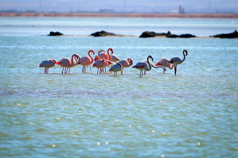 همکاری ۱۰ هزار کشاورز برای احیای تالاب های حوضه دریاچه ارومیه