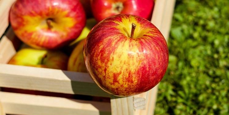 اعلام نرخ خرید حمایتی سیب صنعتی در آذربایجان غربی
