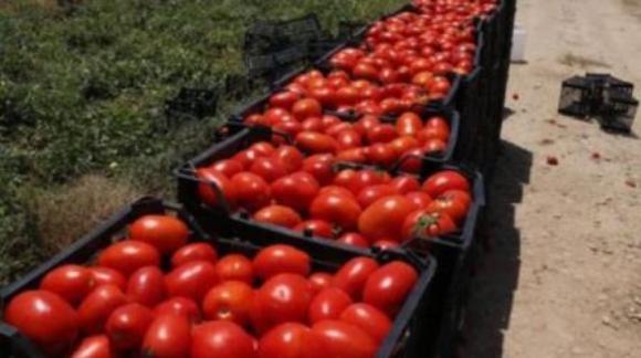 دردسرهای تضمین خرید غیر کارشناسی محصولات کشاورزی در آذربایجان غربی