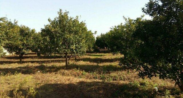 ۴۰ درصد از باغهای آذربایجان غربی فرسوده هستند